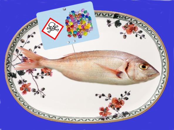 assiette de poisson polluée au plastique